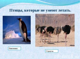 Птицы, которые не умеют летать.ПингвиныСтраусы