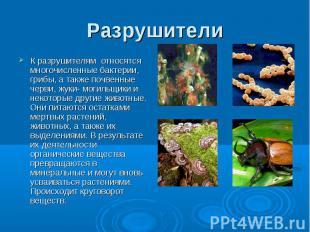 Разрушители К разрушителям относятся многочисленные бактерии, грибы, а также поч
