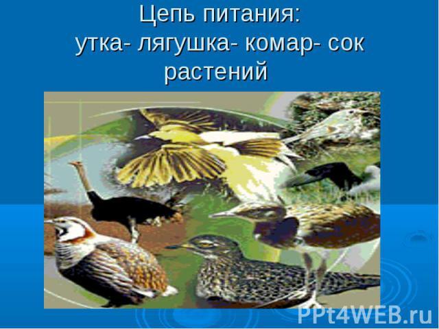 Цепь питания:утка- лягушка- комар- сок растений