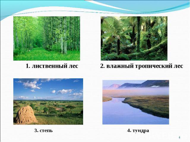 1. лиственный лес 2. влажный тропический лес 3. степь 4. тундра