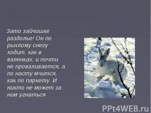 Зато зайчишке раздолье! Он по рыхлому снегу ходит, как в валенках, и почти не пр