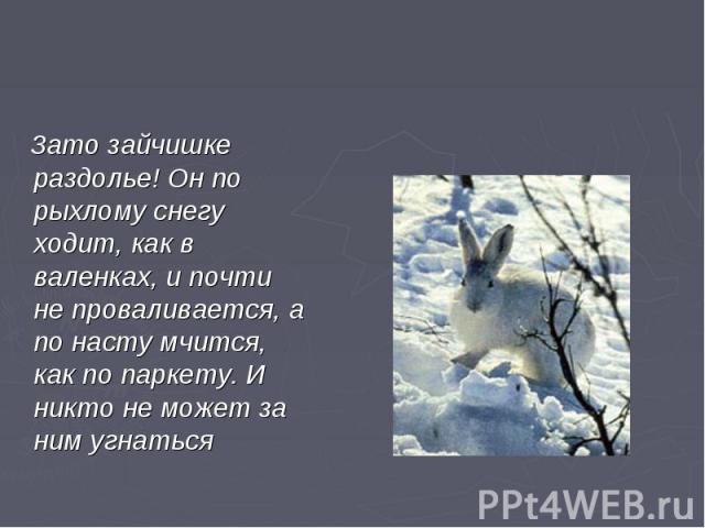 Зато зайчишке раздолье! Он по рыхлому снегу ходит, как в валенках, и почти не проваливается, а по насту мчится, как по паркету. И никто не может за ним угнаться