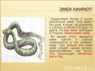 Змеи линяют! Существует более 2 тысяч различных змей. Они живут на суше, в воде,