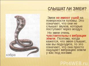 Слышат ли змеи? Змеи не имеют ушей на поверхности головы. Это означает, что они
