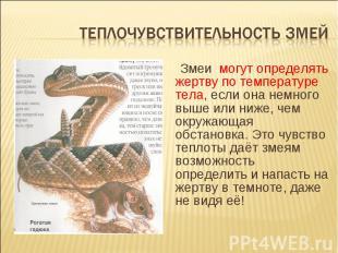 Теплочувствительность змей Змеи могут определять жертву по температуре тела, есл