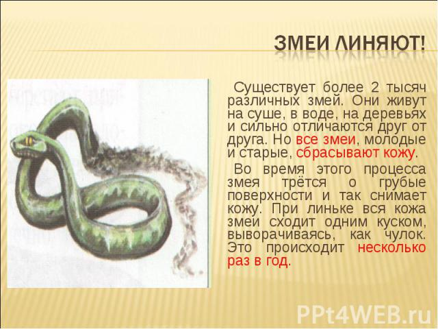 Змеи линяют! Существует более 2 тысяч различных змей. Они живут на суше, в воде, на деревьях и сильно отличаются друг от друга. Но все змеи, молодые и старые, сбрасывают кожу.Во время этого процесса змея трётся о грубые поверхности и так снимает кож…