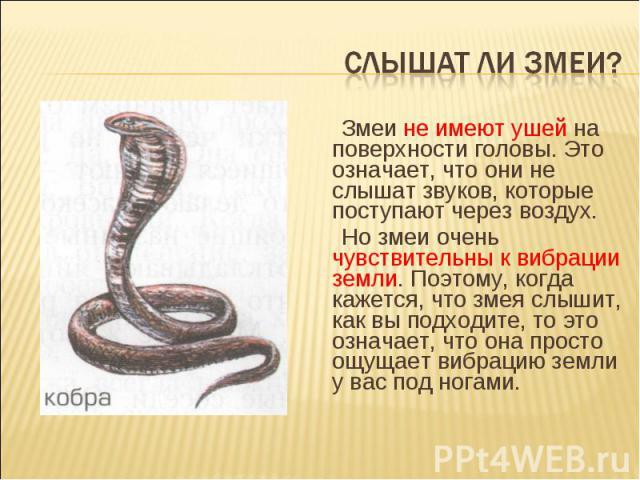 Слышат ли змеи? Змеи не имеют ушей на поверхности головы. Это означает, что они не слышат звуков, которые поступают через воздух.Но змеи очень чувствительны к вибрации земли. Поэтому, когда кажется, что змея слышит, как вы подходите, то это означает…