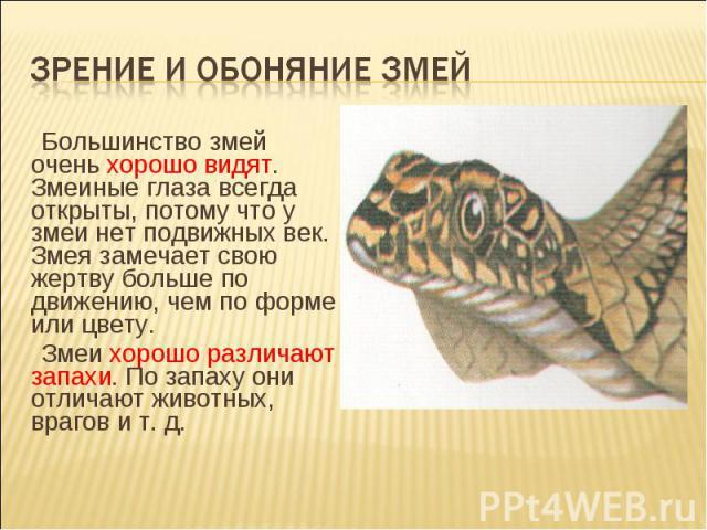 Зрение и обоняние змей Большинство змей очень хорошо видят. Змеиные глаза всегда открыты, потому что у змеи нет подвижных век. Змея замечает свою жертву больше по движению, чем по форме или цвету.Змеи хорошо различают запахи. По запаху они отличают …