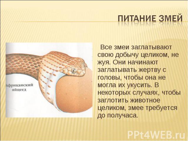 Питание змей Все змеи заглатывают свою добычу целиком, не жуя. Они начинают заглатывать жертву с головы, чтобы она не могла их укусить. В некоторых случаях, чтобы заглотить животное целиком, змее требуется до получаса.