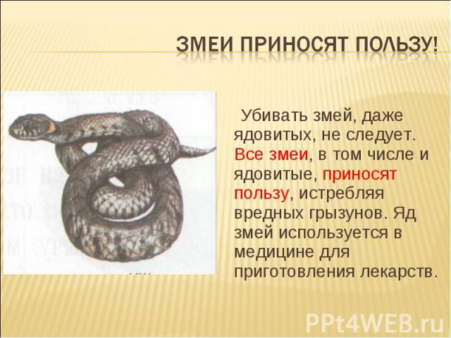 Змеи приносят пользу! Убивать змей, даже ядовитых, не следует. Все змеи, в том числе и ядовитые, приносят пользу, истребляя вредных грызунов. Яд змей используется в медицине для приготовления лекарств.