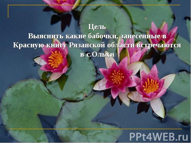 ЦельВыяснить какие бабочки, занесенные в Красную книгу Рязанской области встречаются в с.Ольхи