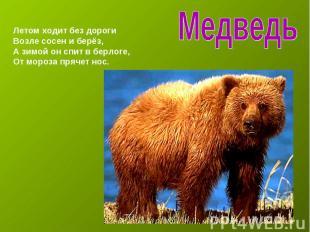 Медведь Летом ходит без дорогиВозле сосен и берёз,А зимой он спит в берлоге,От м