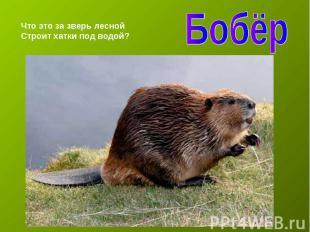 БобёрЧто это за зверь леснойСтроит хатки под водой?