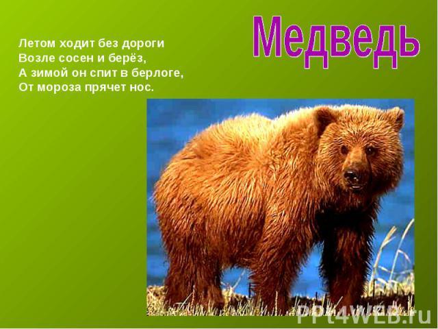 Медведь Летом ходит без дорогиВозле сосен и берёз,А зимой он спит в берлоге,От мороза прячет нос.