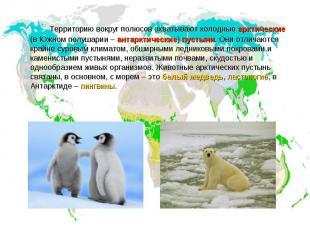 Территорию вокруг полюсов охватывают холодные арктические (в Южном полушарии – а