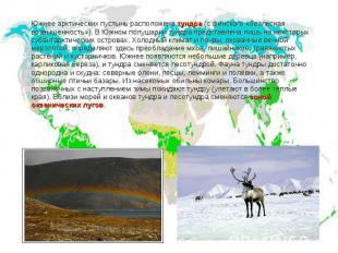 Южнее арктических пустынь расположена тундра (с финского «безлесная возвышенност