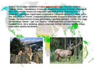 Южнее лесотундры начинаются леса умеренной зоны; сначала хвойные (тайга), затем