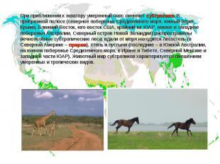 При приближении к экватору умеренный пояс сменяют субтропики. В прибрежной полос