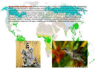 Тропические влажные леса (Южная Флорида, Вест-Индия, Центральная Америка, Мадага