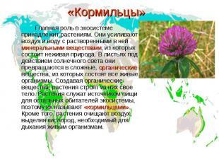 «Кормильцы» Главная роль в экосистеме принадлежит растениям. Они усиливают возду