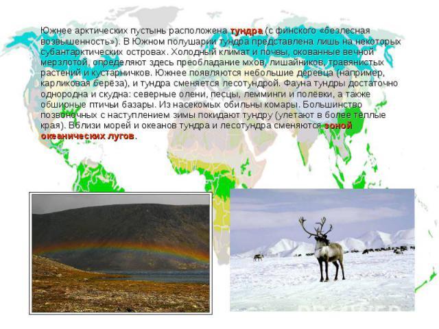 Южнее арктических пустынь расположена тундра (с финского «безлесная возвышенность»). В Южном полушарии тундра представлена лишь на некоторых субантарктических островах. Холодный климат и почвы, окованные вечной мерзлотой, определяют здесь преобладан…