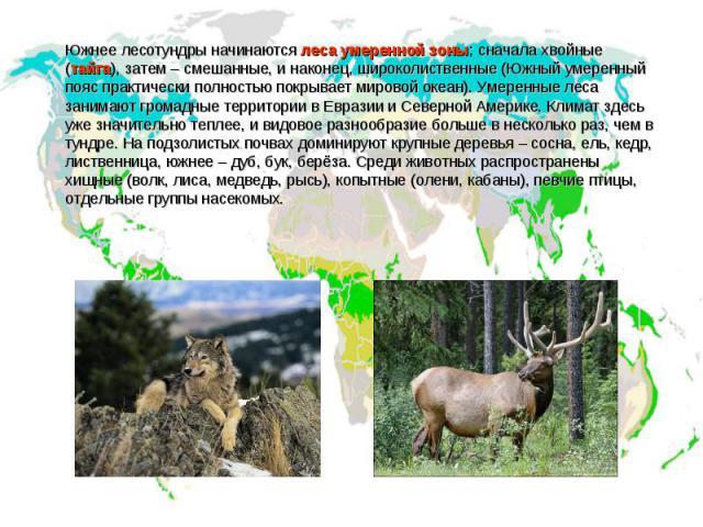 Южнее лесотундры начинаются леса умеренной зоны; сначала хвойные (тайга), затем – смешанные, и наконец, широколиственные (Южный умеренный пояс практически полностью покрывает мировой океан). Умеренные леса занимают громадные территории в Евразии и С…