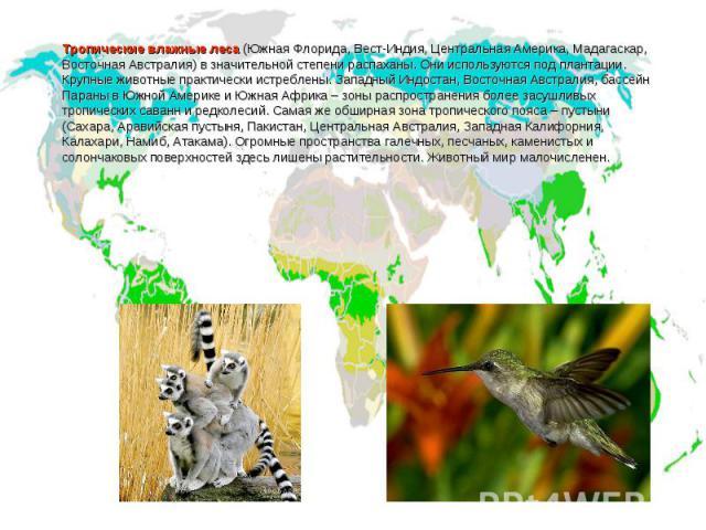 Тропические влажные леса (Южная Флорида, Вест-Индия, Центральная Америка, Мадагаскар, Восточная Австралия) в значительной степени распаханы. Они используются под плантации. Крупные животные практически истреблены. Западный Индостан, Восточная Австра…