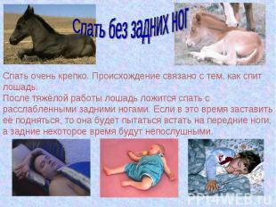 Спать без задних ногСпать очень крепко. Происхождение связано с тем, как спит ло