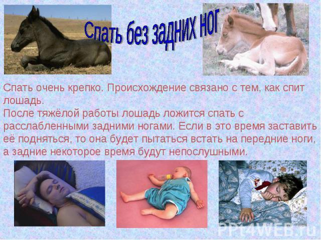 Спать без задних ногСпать очень крепко. Происхождение связано с тем, как спит лошадь.После тяжёлой работы лошадь ложится спать с расслабленными задними ногами. Если в это время заставить её подняться, то она будет пытаться встать на передние ноги, а…