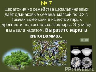 № 7Цератония из семейства цезальпиниевых даёт одинаковые семена, массой по 0,2 г
