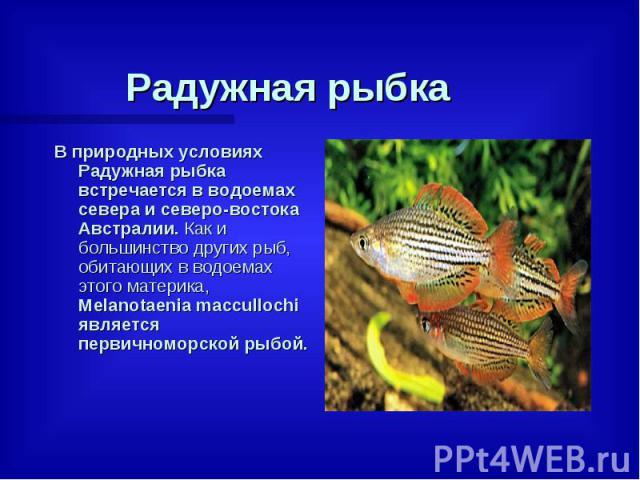 Радужная рыбка В природных условиях Радужная рыбка встречается в водоемах севера и северо-востока Австралии. Как и большинство других рыб, обитающих в водоемах этого материка, Melanotaenia maccullochi является первичноморской рыбой.