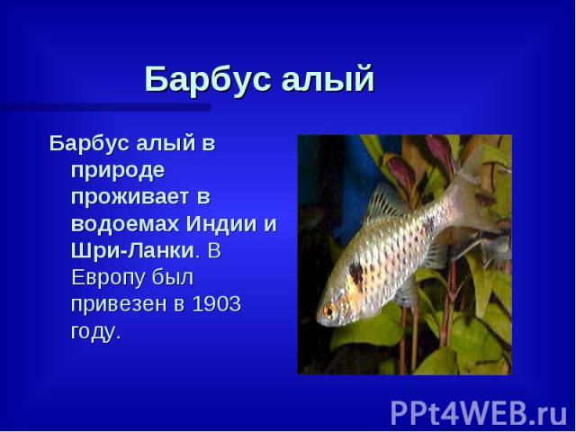 Барбус алый Барбус алый в природе проживает в водоемах Индии и Шри-Ланки. В Европу был привезен в 1903 году.