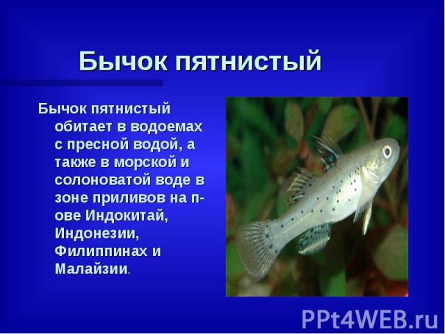 Бычок пятнистый Бычок пятнистый обитает в водоемах с пресной водой, а также в морской и солоноватой воде в зоне приливов на п-ове Индокитай, Индонезии, Филиппинах и Малайзии.
