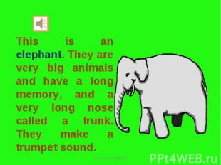 This is an elephant. They are very big animals and have a long memory, and a ver