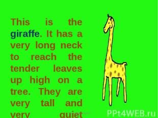 This is the giraffe. It has a very long neck to reach the tender leaves up high