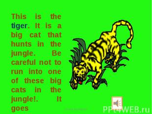 This is the tiger. It is a big cat that hunts in the jungle. Be careful not to r
