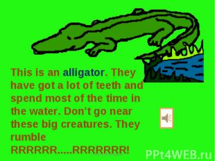 This is an alligator. They have got a lot of teeth and spend most of the time in
