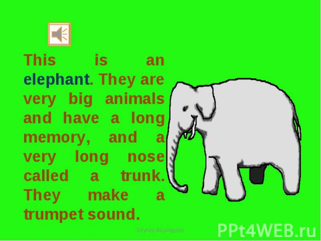 This is an elephant. They are very big animals and have a long memory, and a very long nose called a trunk. They make a trumpet sound.
