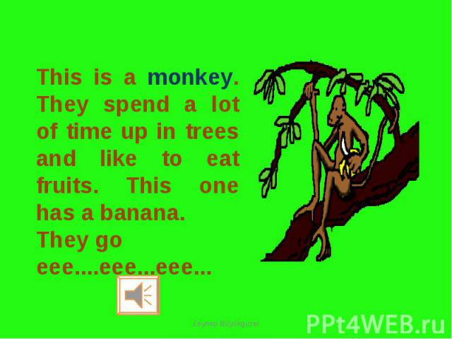 This is a monkey. They spend a lot of time up in trees and like to eat fruits. This one has a banana. They go eee....eee...eee...