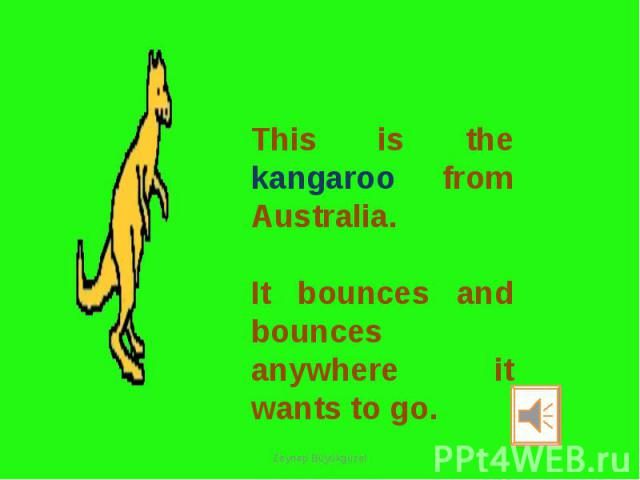 This is the kangaroo from Australia. It bounces and bounces anywhere it wants to go.