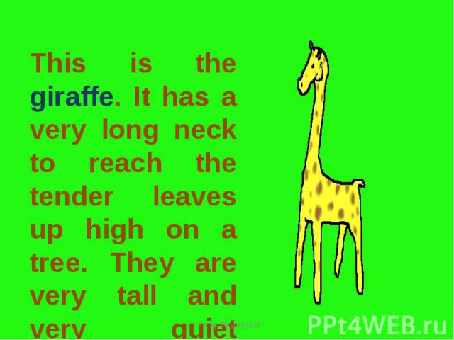 This is the giraffe. It has a very long neck to reach the tender leaves up high on a tree. They are very tall and very quiet animals.