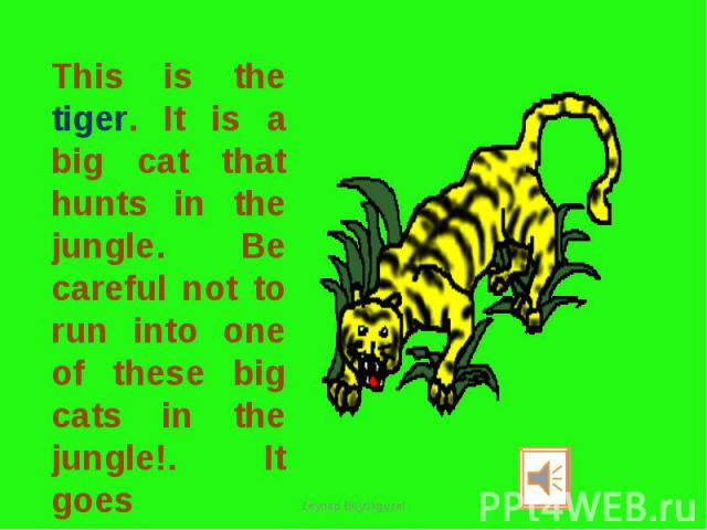 This is the tiger. It is a big cat that hunts in the jungle. Be careful not to run into one of these big cats in the jungle!. It goes GRRRRRR.......