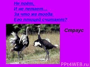 Не поёт, И не летает…За что же тогда Его птицей считают?