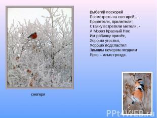 Выбегай поскорейПосмотреть на снегирей…Прилетели, прилетели!Стайку встретили мет
