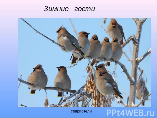 Зимние гости