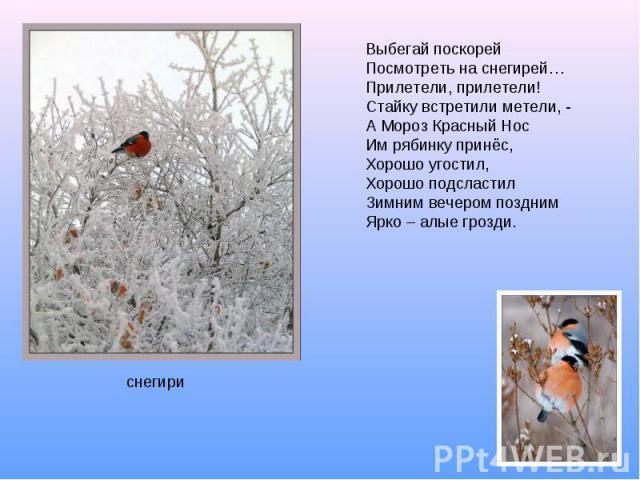 Выбегай поскорейПосмотреть на снегирей…Прилетели, прилетели!Стайку встретили метели, -А Мороз Красный НосИм рябинку принёс,Хорошо угостил,Хорошо подсластилЗимним вечером позднимЯрко – алые грозди.