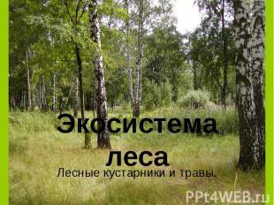 Экосистема леса Лесные кустарники и травы