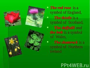 The red rose is a symbol of England, The thistle is a symbol of Scotland, The da