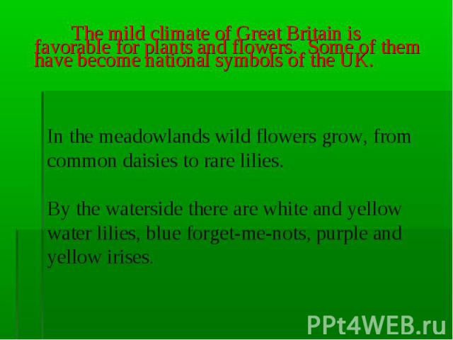 The mild climate of Great Britain is favorable for plants and flowers. Some of them have become national symbols of the UK. In the meadowlands wild flowers grow, from common daisies to rare lilies. By the waterside there are white and yellow water l…