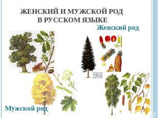 Женский и мужской род в русском языке Мужской родЖенский род